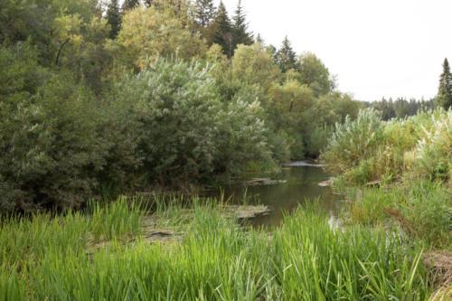 Вид с мостков на Малую Ушайку